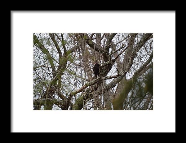 Turkey Buzzard Framed Print featuring the photograph Turkey Vulture by Jessica Cruz