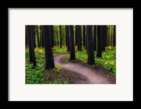 early Fall fall Colors forest Trees autumn Forest amity Woods Duluth Minnesota Nature Serenity Magic Changes greeting Cards nature Greeting Cards Woods mary Amerman Framed Print featuring the photograph Turning by Mary Amerman
