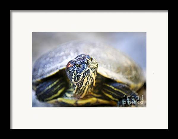 Turtle Framed Print featuring the photograph Turtle by Elena Elisseeva