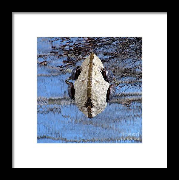 River Framed Print featuring the photograph Turtle Planet by Lili Feinstein
