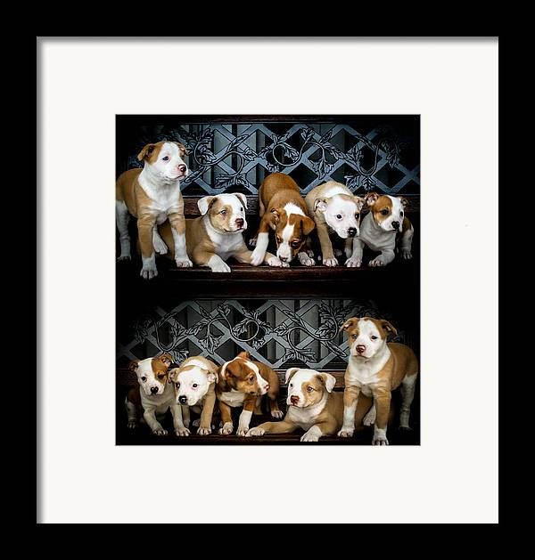 Puppies Framed Print featuring the photograph Twice The Love by Mechala Matthews
