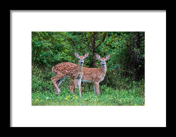 Twins Framed Print featuring the photograph Twins by Denis Therien