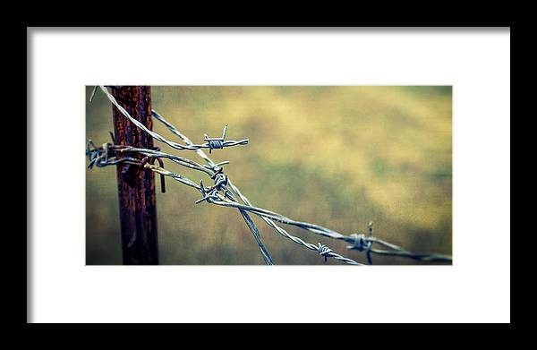Barbed Wire Framed Print featuring the photograph Twisted II by Caitlyn Grasso