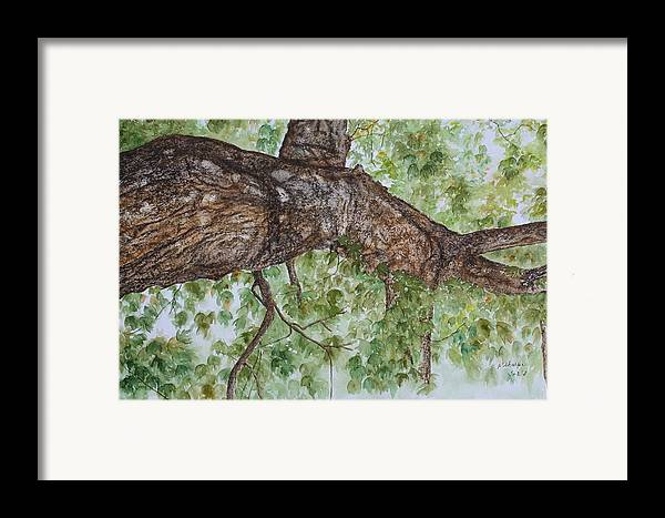 Nature Framed Print featuring the painting Twisted Maple by Patsy Sharpe