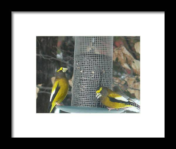 Wildlife Framed Print featuring the photograph Two Beautifies by Brenda Ketch