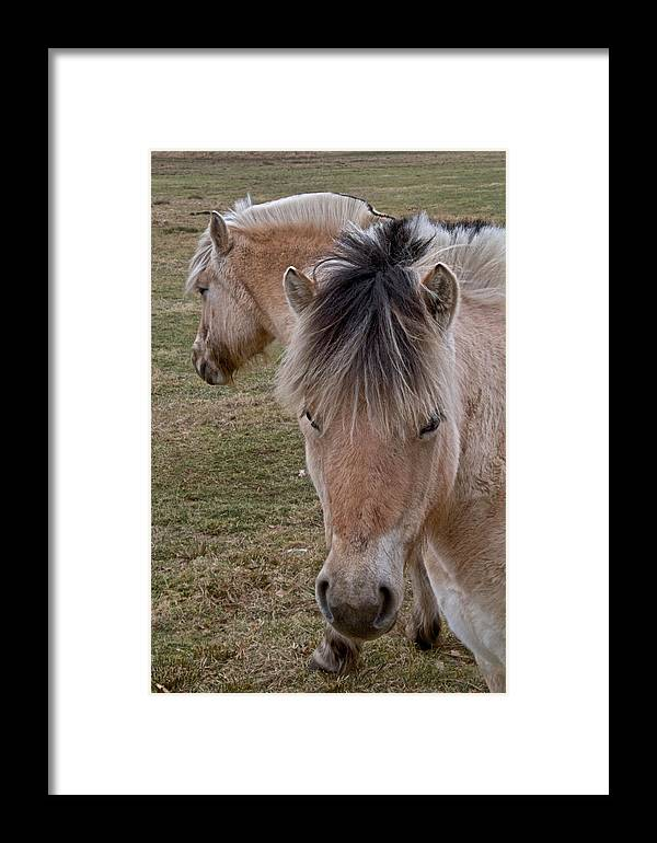Two Heads Framed Print featuring the photograph Two Heads by Odd Jeppesen
