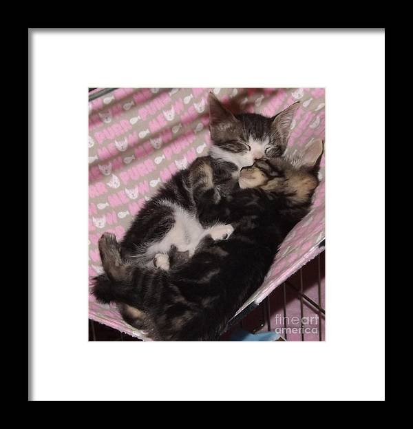 Kittens Framed Print featuring the photograph Two Kittens Sleeping by Jussta Jussta