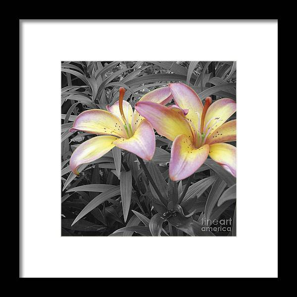 Lilies Framed Print featuring the photograph Two Lilies by Stephen Prestek