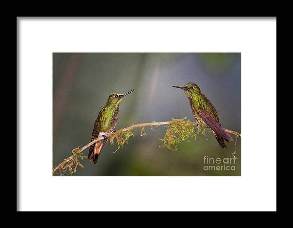 Ecuador Framed Print featuring the photograph Two Of A Kind by Todd Bielby