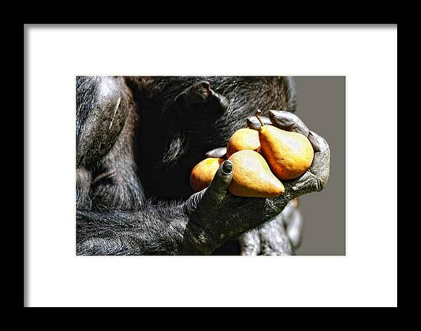 Fruit Framed Print featuring the photograph Two Pear by John Fotheringham