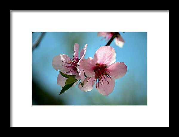 Floral Photography Framed Print featuring the photograph Two Together by David Earl Johnson