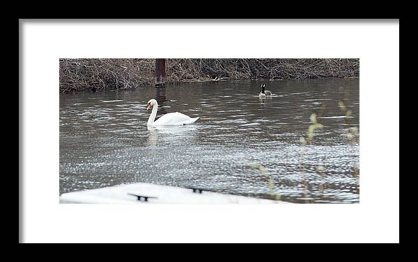 Swan Framed Print featuring the photograph Two Waterfowl by Linda Kerkau