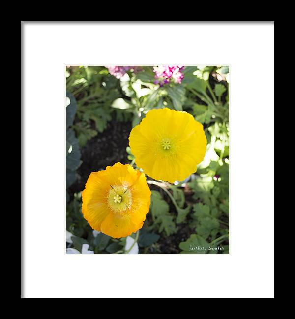 Solvang California Framed Print featuring the digital art Two Yellow Flowers by Barbara Snyder