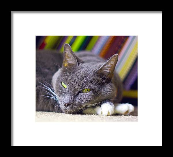 Grey House Cat Framed Print featuring the photograph Tyla by Joseph C Hinson Photography