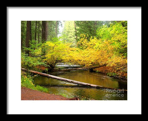 Serenity Scenes Photography Landscape Scenic Pacific Northwest Stream Forest Woods Trees River Rocks Shasta Eone Oregon Water Green Nature Union Creek Fall Autumn Framed Print featuring the painting Uc10-2 by Shasta Eone