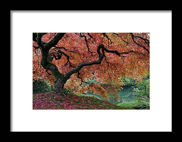 Under Fall's Cover Framed Print featuring the photograph Under Fall's Cover by Wes and Dotty Weber