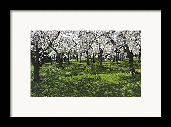 Cherry Blossoms Framed Print featuring the photograph Under The Cherry Blossoms - Washington Dc. by Mike McGlothlen