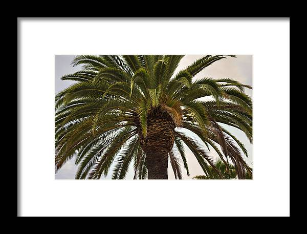 Palm Framed Print featuring the photograph Under The Palm II by Ricky Barnard