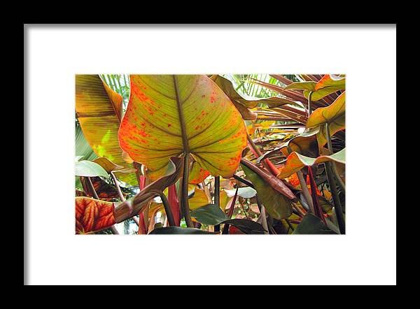 Duane Mccullough Framed Print featuring the photograph Under The Tropical Leaves by Duane McCullough