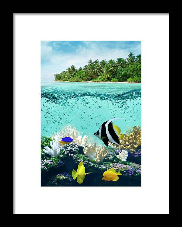 Bedrock Framed Print featuring the photograph Underwater Life In Tropical Sea by Narvikk