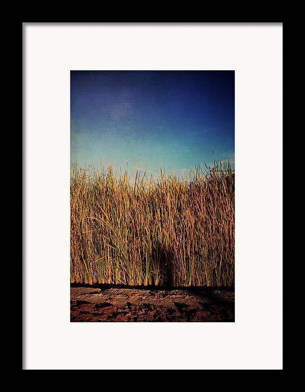 Niland Framed Print featuring the photograph Unexpected Things by Laurie Search