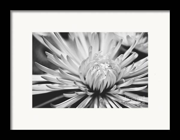 Flower Picture Framed Print featuring the photograph Unfolding by Artist and Photographer Laura Wrede