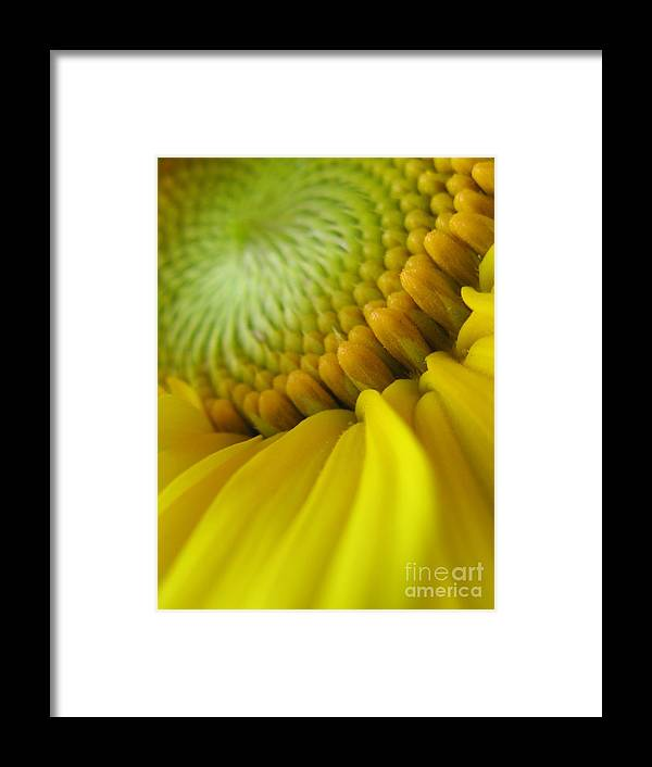 Flower Framed Print featuring the photograph Unity Photography by Tina Marie