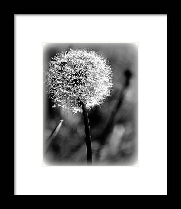 Wish Framed Print featuring the photograph Unspent Wishes by Kerri Huven