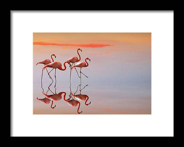 Animals Framed Print featuring the photograph Untitled by Anna Cseresnjes