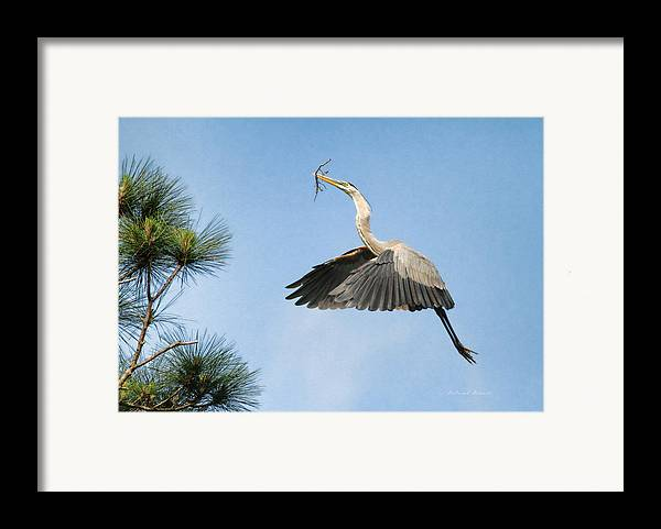 Blue Heron Framed Print featuring the photograph Up To The Nest by Deborah Benoit