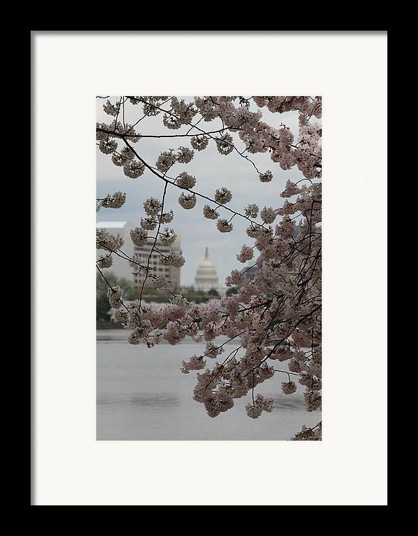 Attraction Framed Print featuring the photograph Us Capitol - Cherry Blossoms - Washington Dc - 01132 by DC Photographer
