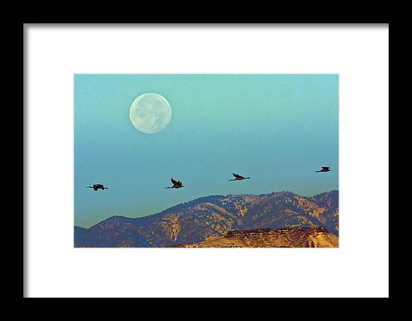 Animal Framed Print featuring the photograph Usa, New Mexico, Bosque Del Apache by Jaynes Gallery