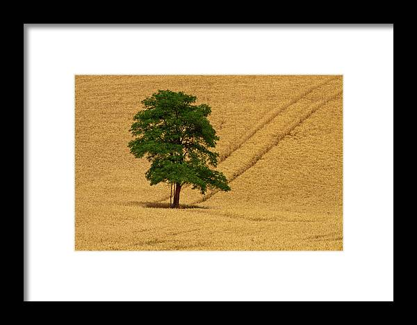 Abundance Framed Print featuring the photograph Usa, Washington State, Palouse Region by Terry Eggers