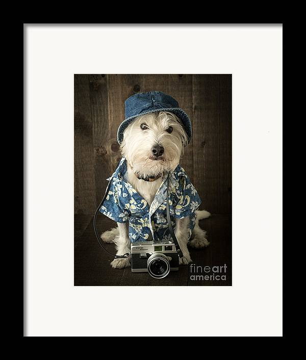 Dog Framed Print featuring the photograph Vacation Dog by Edward Fielding