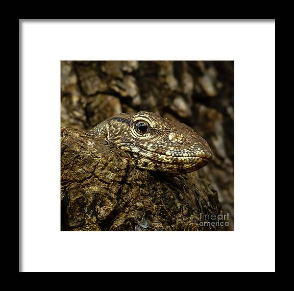 Animal Framed Print featuring the photograph Varanus In Tree by Inez Wijker