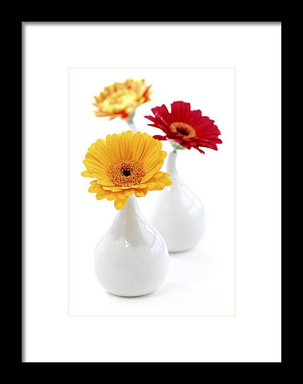 Vase Framed Print featuring the photograph Vases With Gerbera Flowers by Elena Elisseeva