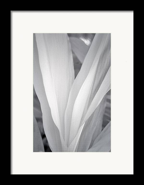 3scape Photos Framed Print featuring the photograph Veil by Adam Romanowicz