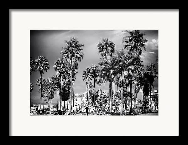 Venice Beach Palms Framed Print featuring the photograph Venice Beach Palms by John Rizzuto