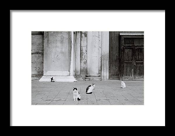 Cat Framed Print featuring the photograph Cats Of Venice by Shaun Higson
