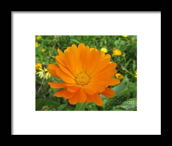 Flowers Framed Print featuring the photograph Very Lovely Orange Bloom by Tina M Wenger