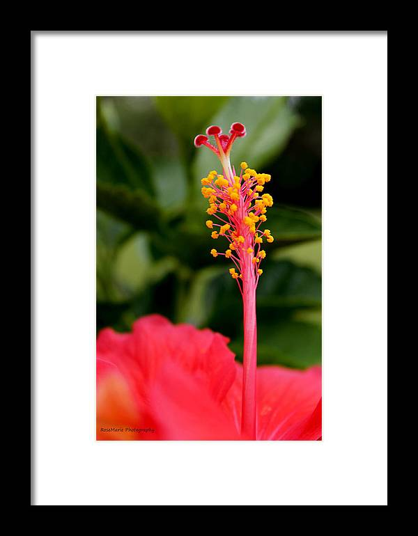 Hibiscus Framed Print featuring the photograph Vibrant Life by Vanessa Parent