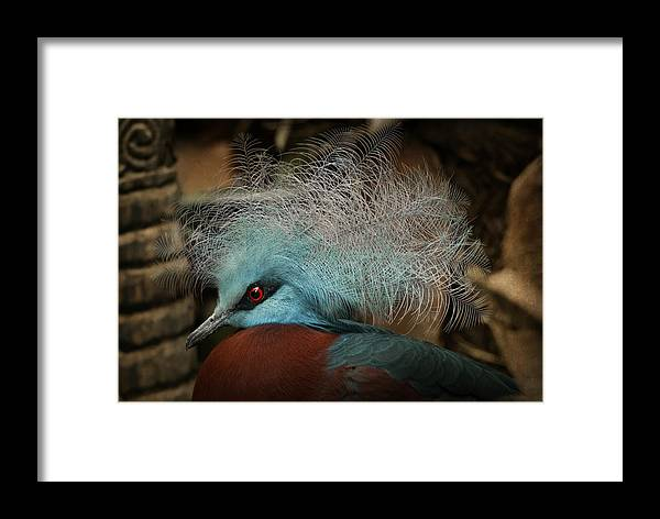 Domaine De Cambron Framed Print featuring the photograph Victoria Crowned Pigeon In Tribal Decor by Steppeland -