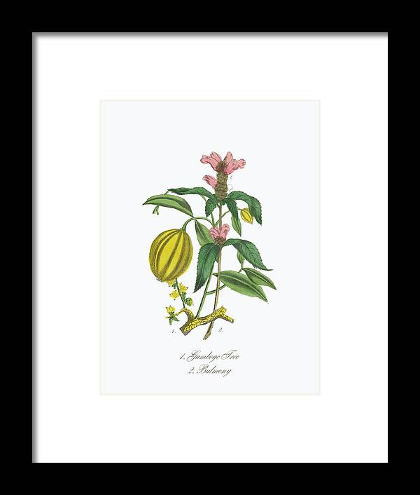 White Background Framed Print featuring the digital art Victorian Botanical Illustration Of by Bauhaus1000