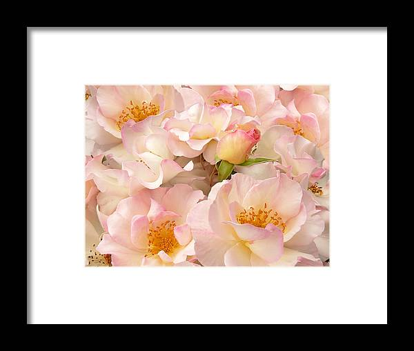 Rose Framed Print featuring the photograph Victorian Pink Roses Bouquet by Jennie Marie Schell