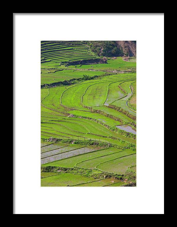 Asia Framed Print featuring the photograph Vietnam, Muong, Elevated View Of Rice by Walter Bibikow