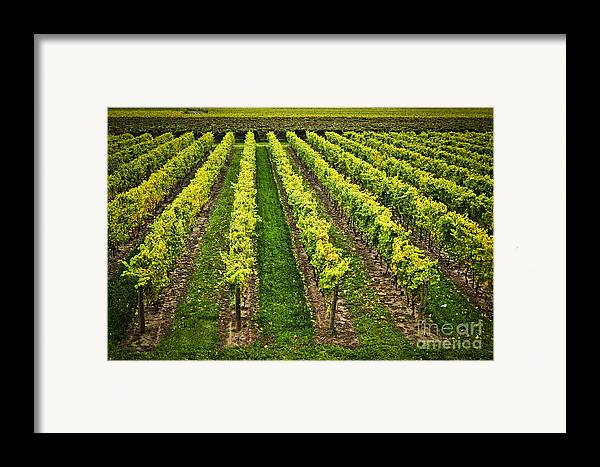 Row Framed Print featuring the photograph Vineyard by Elena Elisseeva