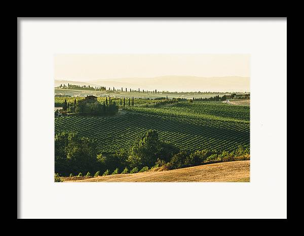 Fine Art Framed Print featuring the photograph Vineyard From Above by Clint Brewer