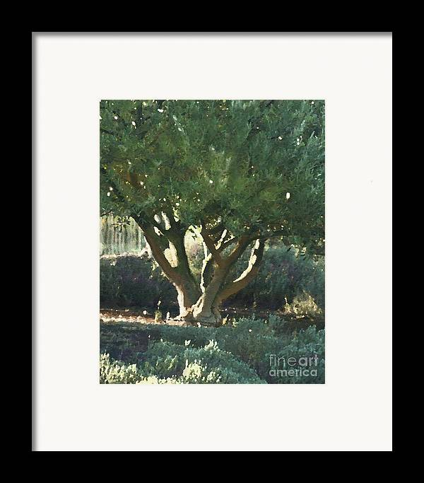 Corde Valle San Martin Ca Framed Print featuring the painting Vineyard Olive by Artist and Photographer Laura Wrede