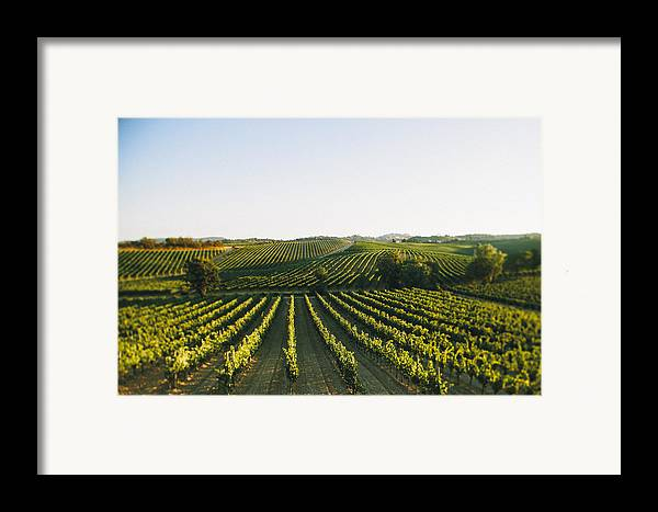 Fine Art Framed Print featuring the photograph Vineyard Patchwork by Clint Brewer