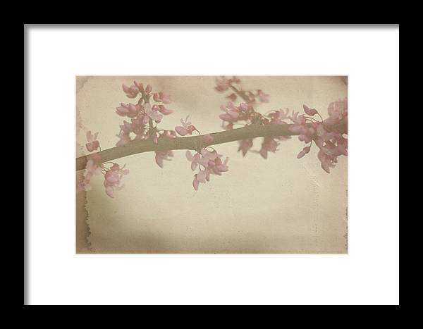 Bloom Framed Print featuring the photograph Vintage Bloom by Melissa Blazer